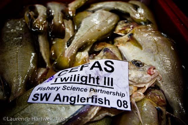 Through The Gaps Newlyn Fishing News 19 10 08 26 10 08